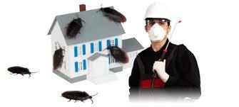 شركة مكافحة حشرات بعرعر وسكاكا